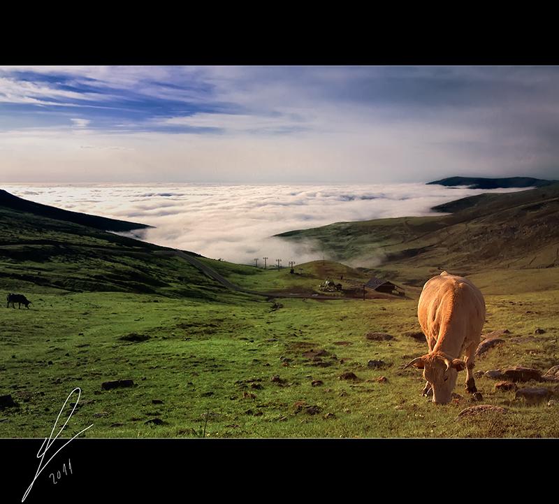 La vaca en el puerto - Mirador del Chivo - Cantabria