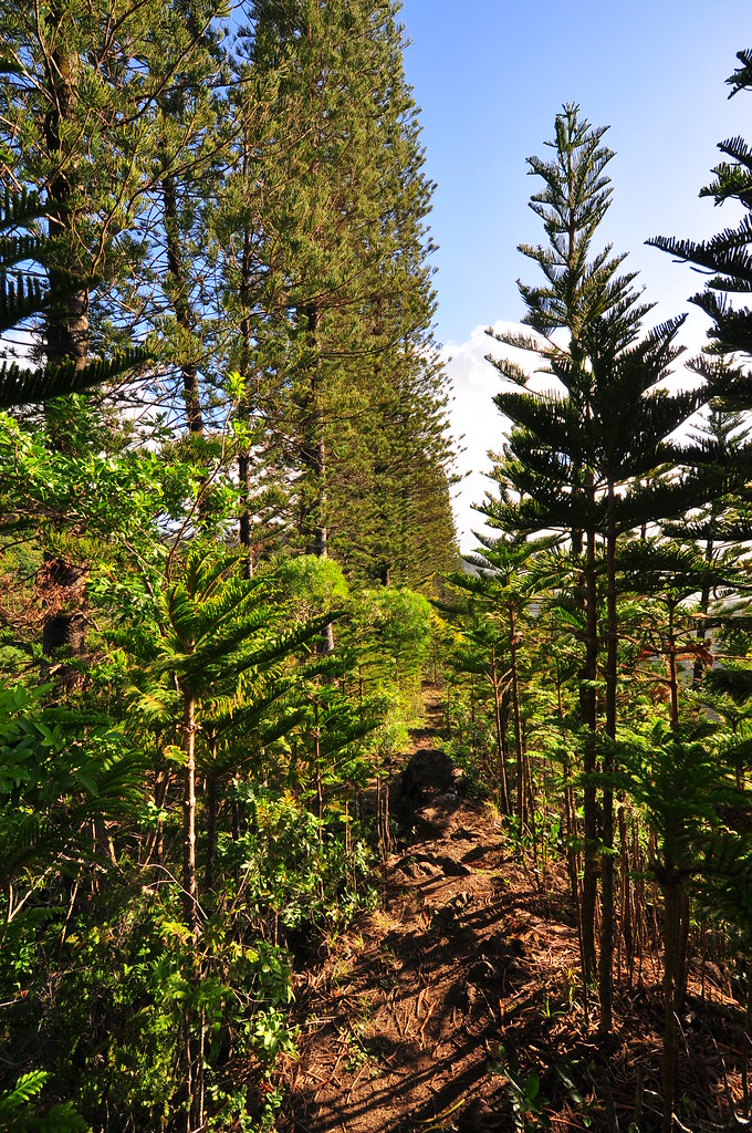 Not So Great Hiking Blog Lanihuli