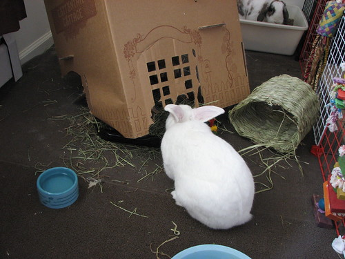 gus tries to eat his hay