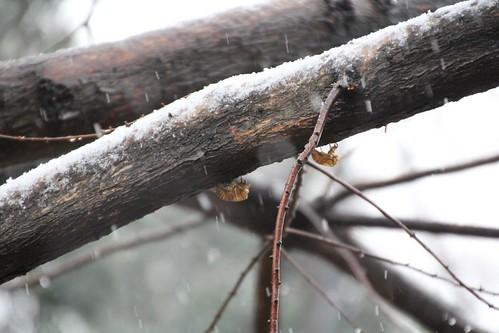 雪と蝉の抜殻