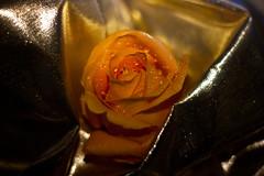 Valentine_Rose (82 of 82)