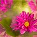 Fleurs magiques