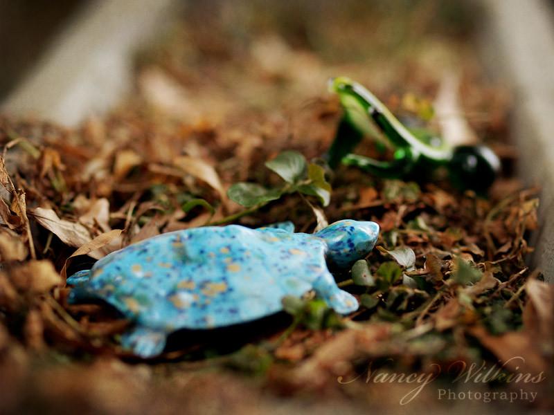 49/365 turtle & frog