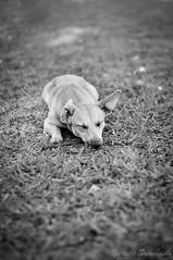 Brinca comigo vai!! (Yuricka Takahashi) Tags: nikon mg cachorro takahashi horizonte belo d90 yuricka
