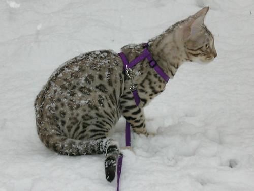 SnowKitties03