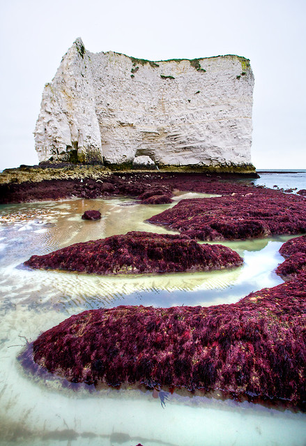 Old Harry - The Sea Floor