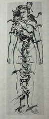 Map of Zodiac Signs on Human Body (noriko.stardust) Tags: pictures old signs sign illustration book image leo drawing profile cancer picture line sagittarius scorpio medical anatomy zodiac 12 aquarius taurus pisces gemini source astrology virgo libra aries alchemy capricorn remedy astrological alchemist homeopathic homeopathy