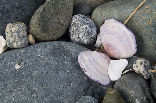 purple butterfly amongst the rocks