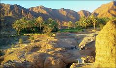 C360_2011-02-23 17-29-26 (MagicPAD - الكعبي) Tags: uae الإمارات الجزيرة الظاهر ناصر الكعبي الخطوة مصح محضة