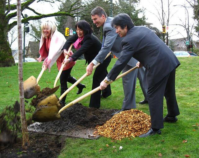 Cherry Tree planting-