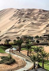 Road to Desert (.ღ♫°Qanas°♫ღ.) Tags: light two sky green up canon palms photography march day desert walk top dunes south uae line sands curve abu dhabi effect hdr qanas liwa rashed 2011 nakheel qaser alzaabi alsarab