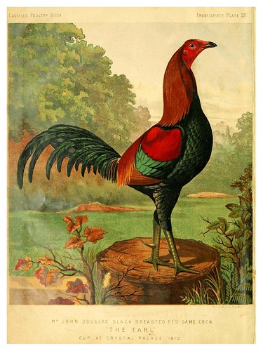 001--The illustrated book of poultry. With practical scheduals…1873-Lewis Wright