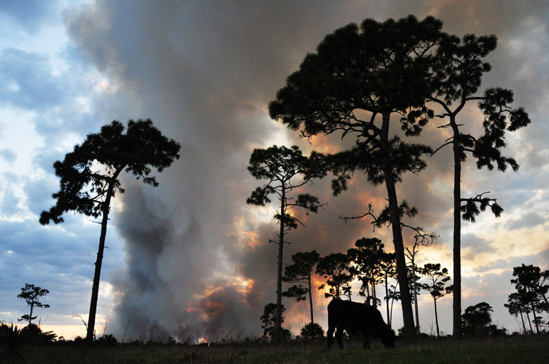 web_florida_wildfire_0084