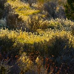 Morning Light (nebulous 1) Tags: california nikon joshuatree joshuatreenationalpark nebulous1