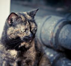 """What are you looking at?"" (benjiphig) Tags: animal cat lens outside 50mm prime birmingham kitten feline dof bokeh depthoffield whiskers birminghamuk fifty lightroom nifty focal preset"