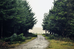 Axenfell Plantation (sammie) Tags: road trees mountain west green nature wet rain forest woodland dark landscape island countryside vanishingpoint scary woods scenery colours view mud path metallic wildlife branches north eerie symmetry minimal creepy hills plantation fields week10 winding simple isleofman middleofnowhere leadinglines inthedistance snaefell parthdr 52weeksproject photoshopcs4 nikond5000 sammiecainephotography sammie