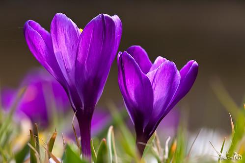 Spring, Lente, Frühling, Printemps