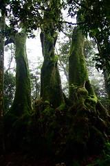 Springbrook National Park (cjrada) Tags: nature australia springbrook springbrooknationalpark
