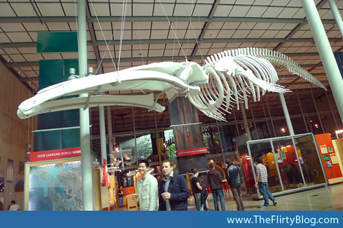 CA-academy-of-sciences-whale-skeleton