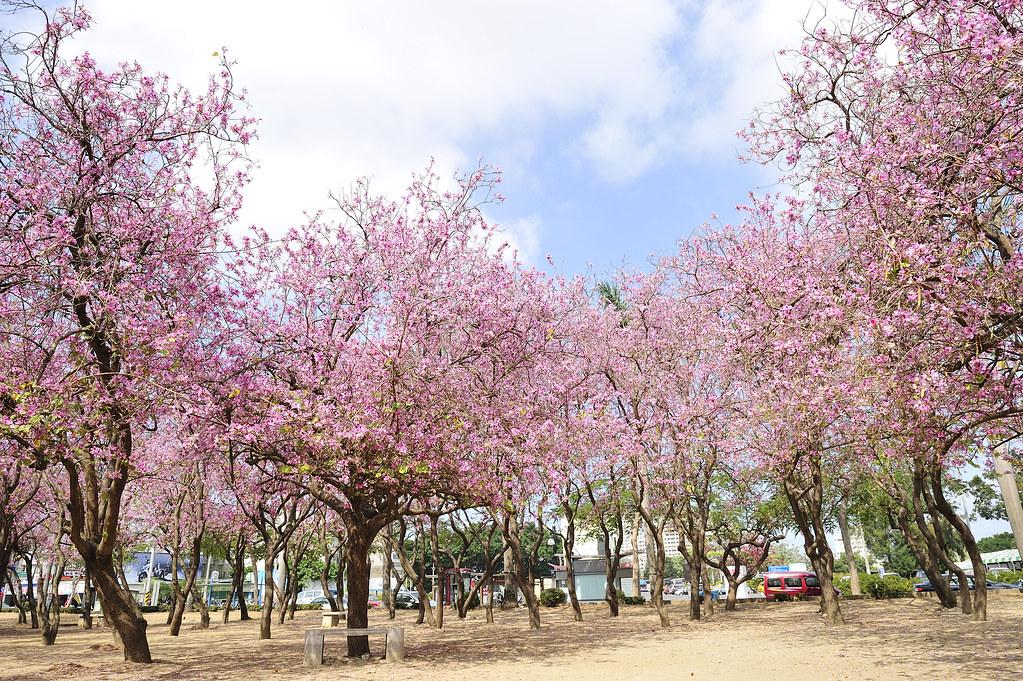 台南公園.怒放花海中~