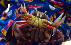 Way better than hotwheels (chadskeers) Tags: africa kids canon 50mm crab ghana afrika ef50mmf18ii voltaregion atorkor eos550d rebelt2i