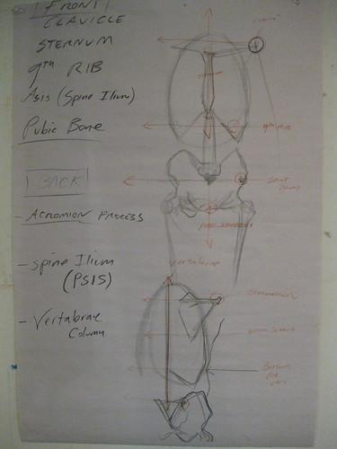 RLiberace Anatomy of Torso wkshop - Robs dwg 2