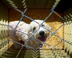 Lola, lolita! (Mariavica17-) Tags: lola lolita bonita bestfriend mascota picnik beautifuldog mydog mypet mejoramigo mariavica