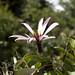 Fiore sconosciuto sulla Carretera Austral