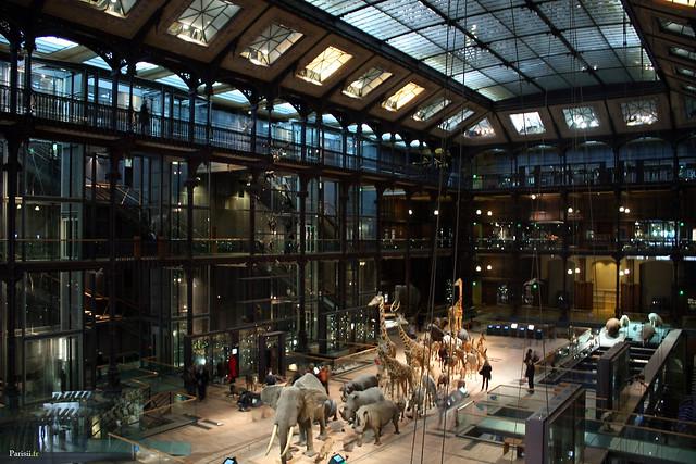 Les animaux de la savane africaine occupent la place centrale de la galerie