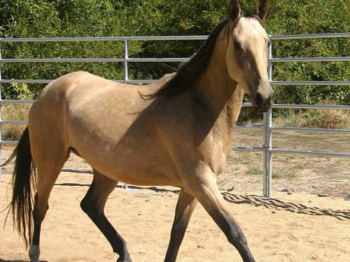 horses wallpaper for desktop. Best Horse wallpapers
