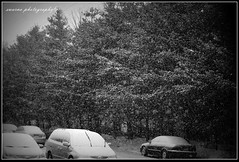 let it snow (Swarna Rajan Photography) Tags: winter snow ice canon snowstorm icestorm blizzard