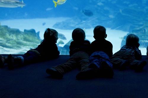 aquarium_8
