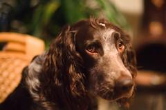 Dog Eyes (Gr@vity) Tags: dof minolta bokeh sony a900 minolta50mm14 beyondbokeh