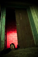Don't push the button ! (Ysalis.net) Tags: urban abandoned lift abandon urbanexploration 5d 24mm exploration abandonned ascenceur urbex urbaine abandonné urbanurbex
