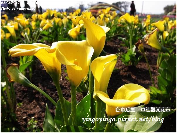 台中后里_中社光觀花市20110130_R0017620