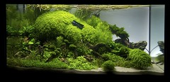 XL - placed no 1 (jfravn) Tags: hannover prize aquascape artoftheplantedaquarium