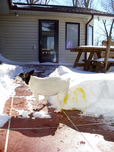 2011-02-02 - Snow Pile! - 0010