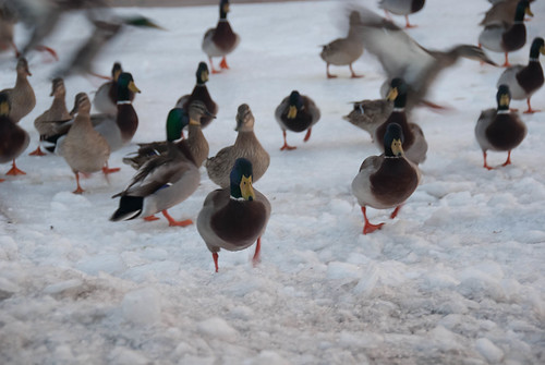 20110204-FrozenBirds-08-8.jpg