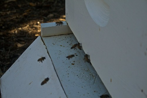 Hive Activity after Week of Cold Weather