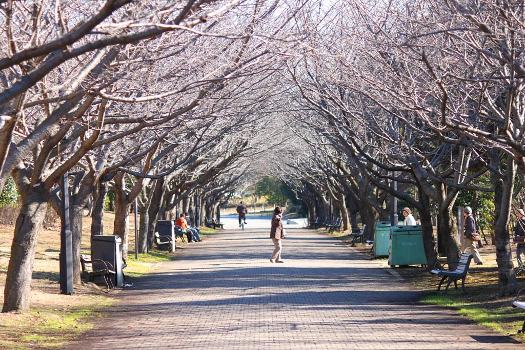 Kasai Rinkai Park Narcissus Festival (11)