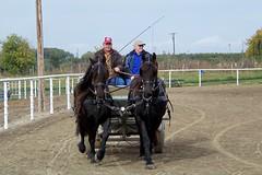 100_5425 (obsidianmoonranch) Tags: horses horse equestrian horsebackriding equine trailride friesian carriagedriving