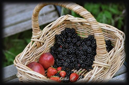 Fresh fruit for the picking!