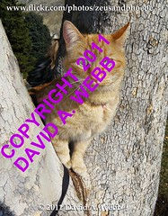 Phoebe enjoying the view (youtube.com/utahactor) Tags: red usa pet cats pets tree yellow cat mackerel golden ginger utah chats kitten feline chat flickr tabby kitty whiskers phoebe gato gata felines spotted provo striped furbaby gatas furbabies anawesomeshot impressedbeauty catnipaddicts