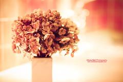 Still Beautiful - Day 196/365 (Olivia L'Estrange-Bell) Tags: 365 driedflowers 365project oliviabell tbsart