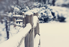 It's Friday and Look, There's a Fence! (marysmyth(NOLA13) ) Tags: wood winter snow lensbaby fence bokeh hff 2011 fencefriday happyfencefriday