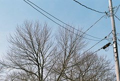 Morning test shot (Julio Barros) Tags: color film 50mm nikon fuji superia iso400 f18 xtra c41 homedeveloped n2020