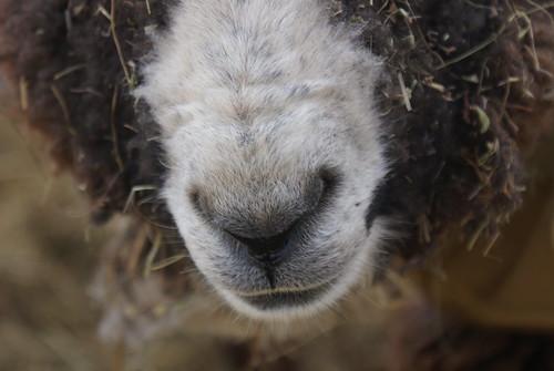 Hokey Pokey's nose