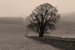 Loneliness (Stephen Laverack) Tags: winter bw mist tree wall sepia lonely