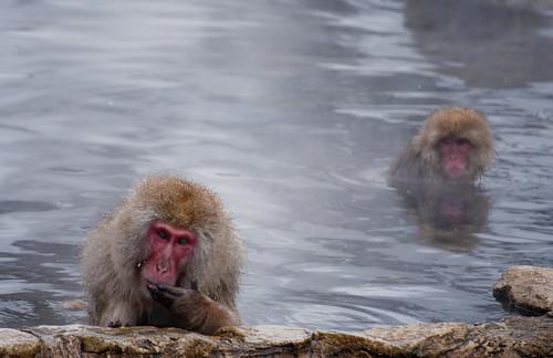 Parque de los monos de Jigokudani
