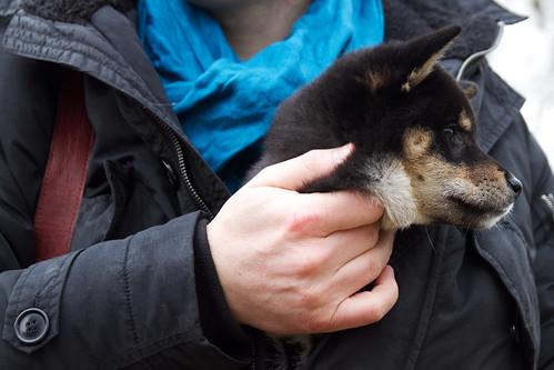 Jacket puppy